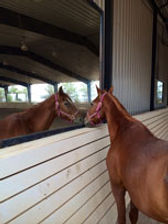 why ranch, equine therapy, equestrian therapy, youth organization, nonprofit, las vegas
