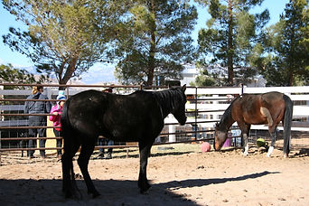 why ranch, horse therapy, release forms