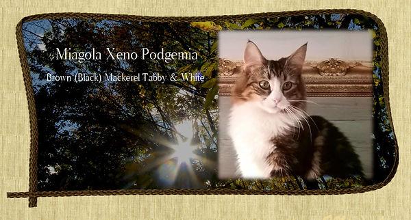 podgemia_m_cat.jpg