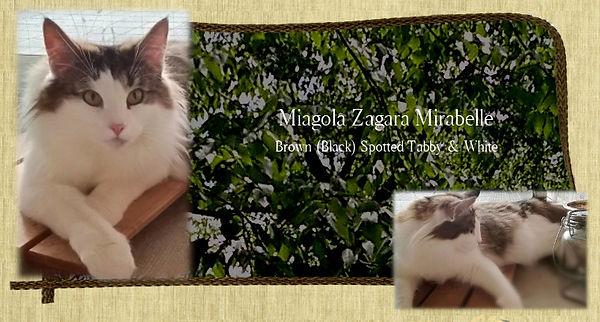 mirabelle_m_cat.jpg