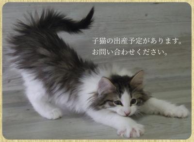 contact_utano.jpg
