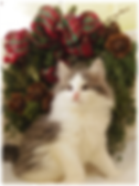 T-litter_Christmas02.png