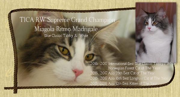 madrigale_m_cat.jpg