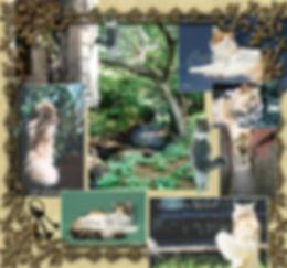 Cattery Miagola ー みゃごら ー 栃木県にあるノルウェージャンフォレストキャットのキャッテリーです。