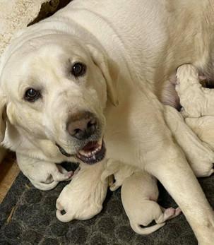 jewel puppies - 5.25.jpg