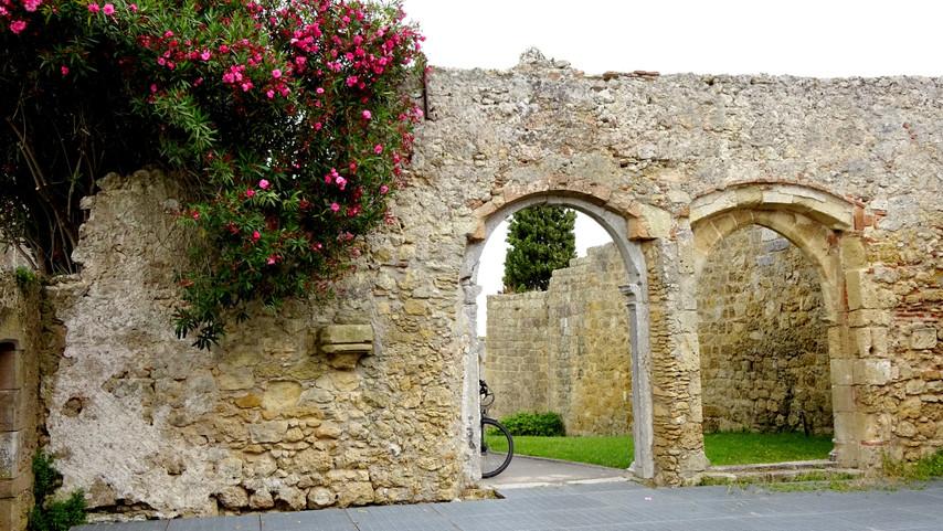 Oleander growing in the ruins of Palmela Castle