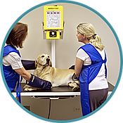Vet giving a dog an x-ray
