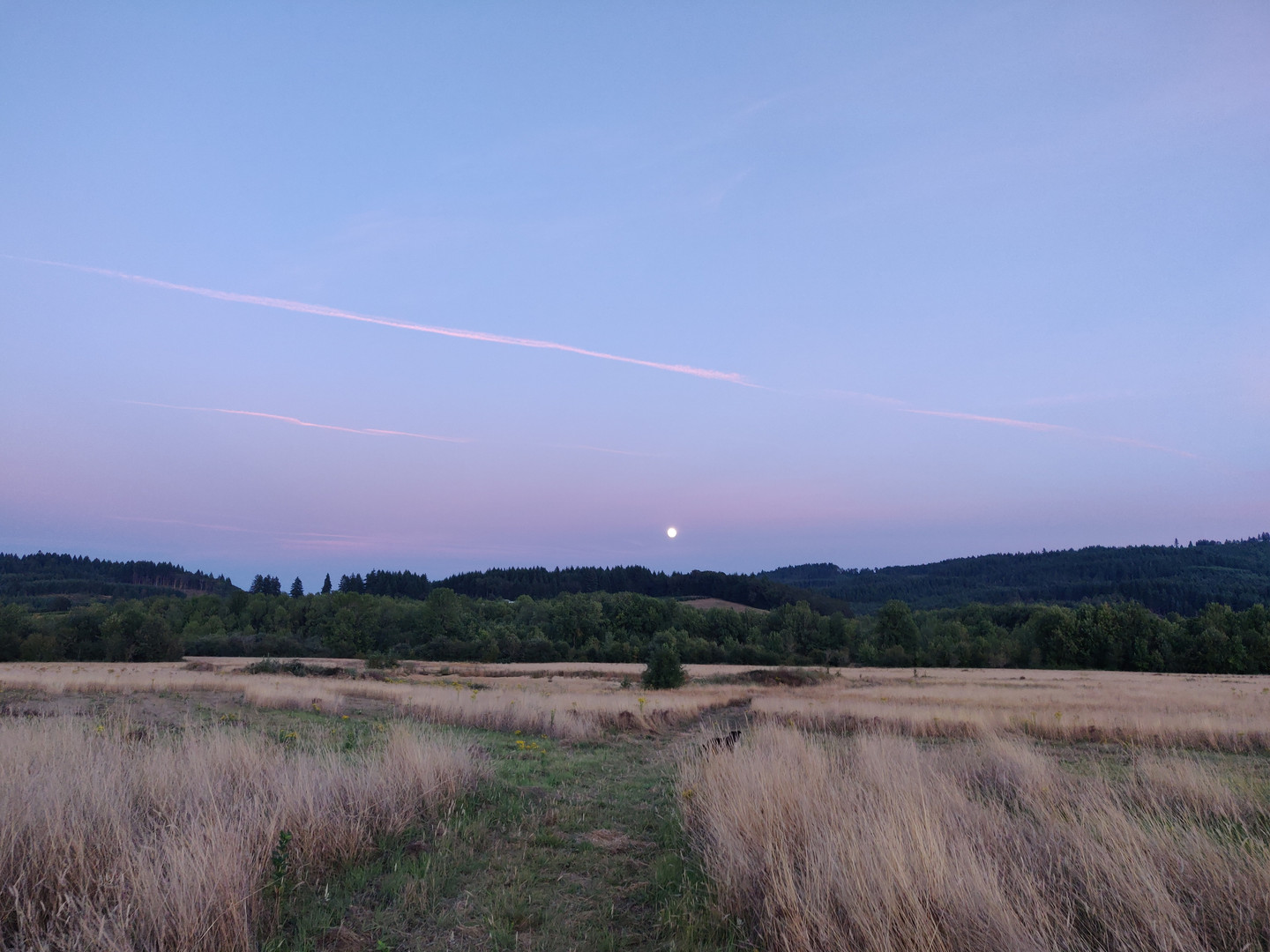Rising Moon looking South.jpg