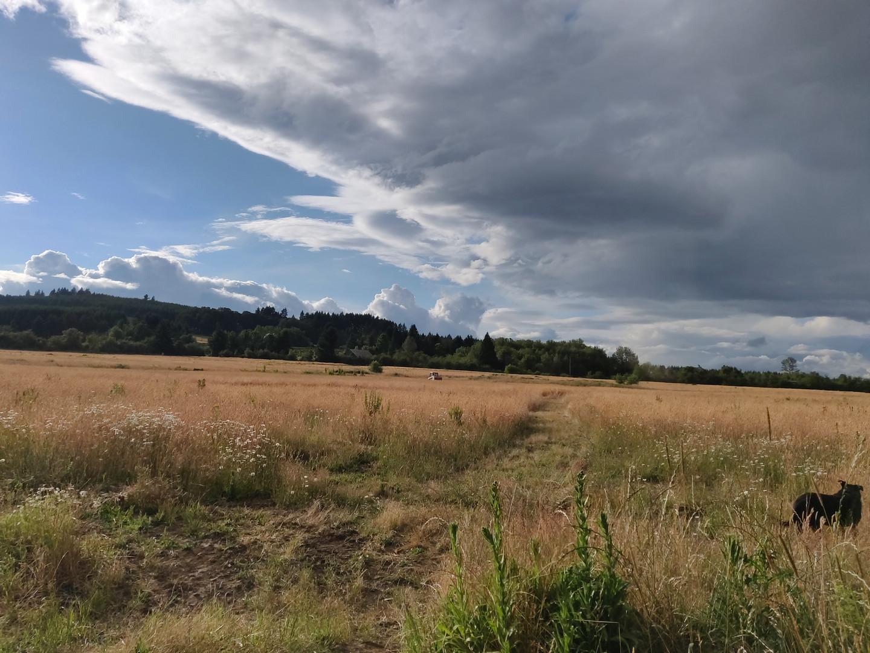The Field.jpg