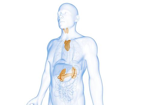 cirugia-endocrina-metabolica.png