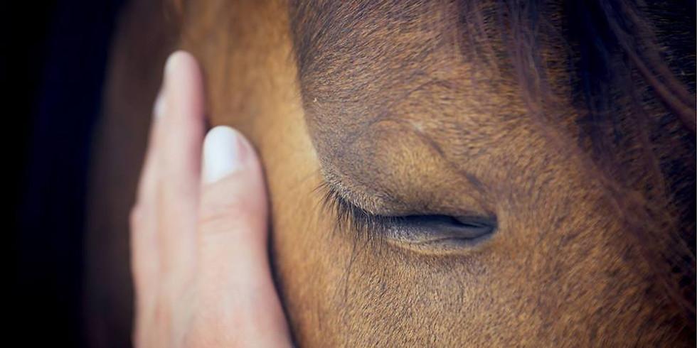 Equine Wisdom and Coaching with Lori Morman