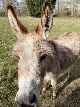 AlanJ_Donkey.JPG