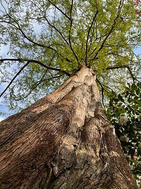 AlanJ_Tree.JPG