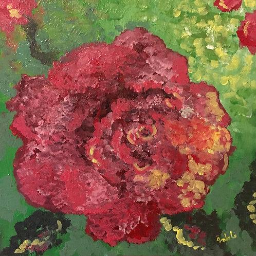 Rose on Gorda