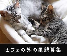 外猫バナー.jpg