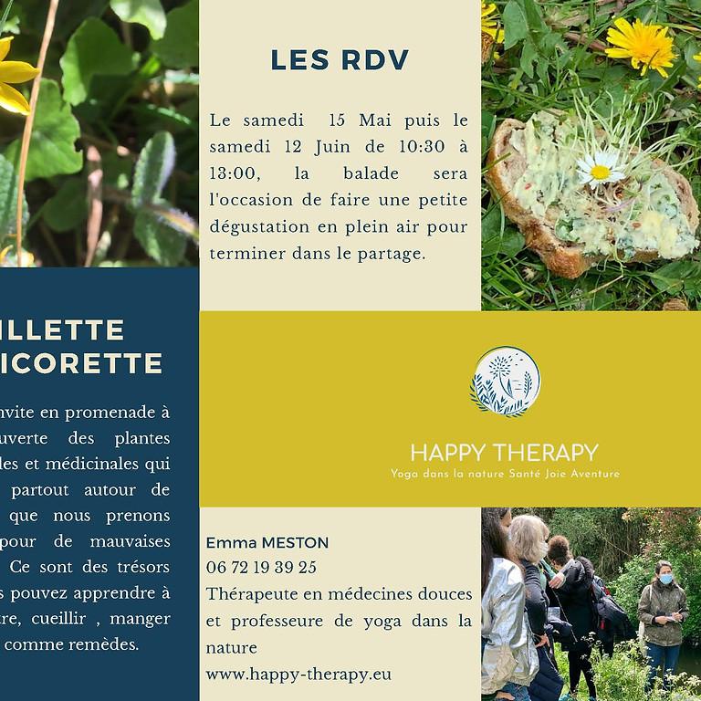 Balade botanique en bords de Seine