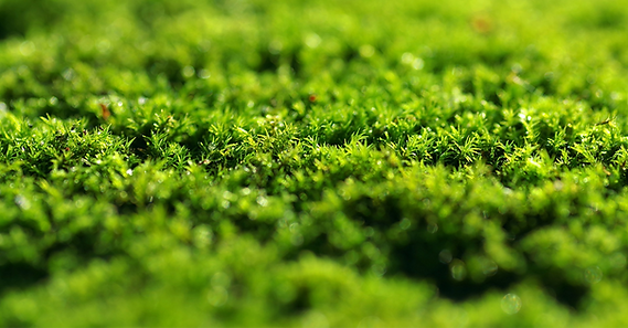 moss-2990563_1920_edited.png
