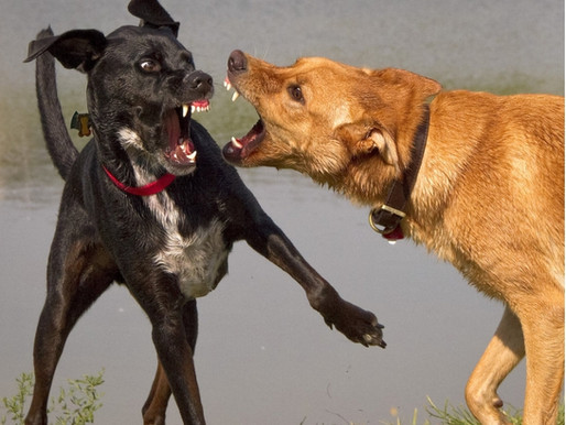 Why You Should Keep Your Dog Away From Dog Parks