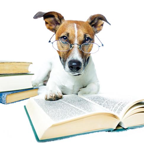 The 10 Commandments of Dog Training
