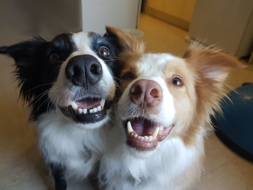 Five Reasons You Should NOT Get Two Dogs at Once