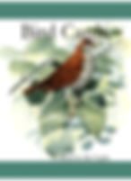Bird Cards Image.PNG