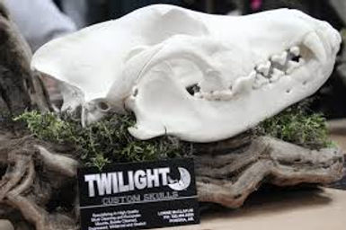 Twilight Custom Skulls