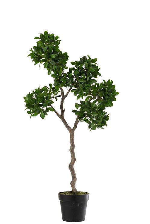 Ficus Arbre En Pot Plastique Vert/Noir Large
