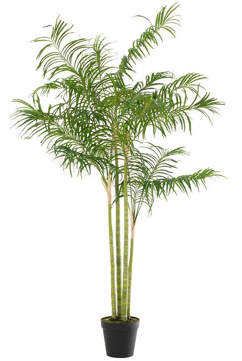 Palmier Bambou En Pot Plastique Vert/Noir