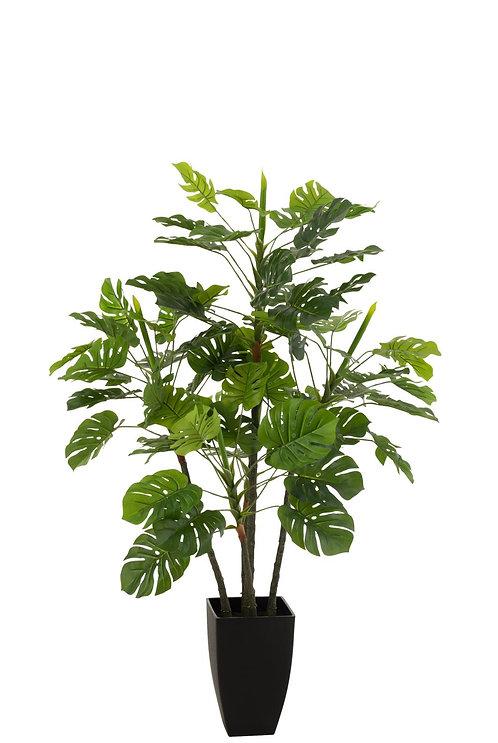 Philodendron En Pot Plastique Vert Large