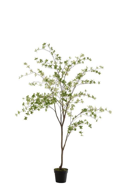 Plante Fines Feuilles Plastique Vert/Noir