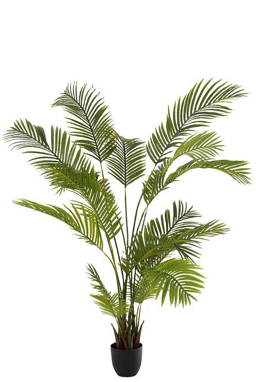 Chrysalidocarpus En Pot Plastique Vert