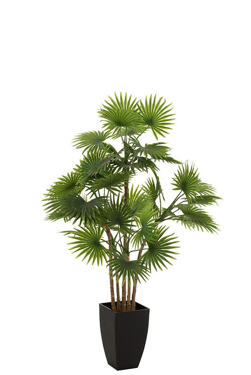 Palmier Fan En Pot Plastique Vert