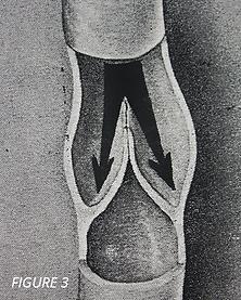 normal veinous circulation