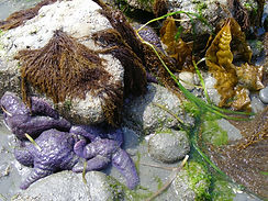 intertidal life.jpg