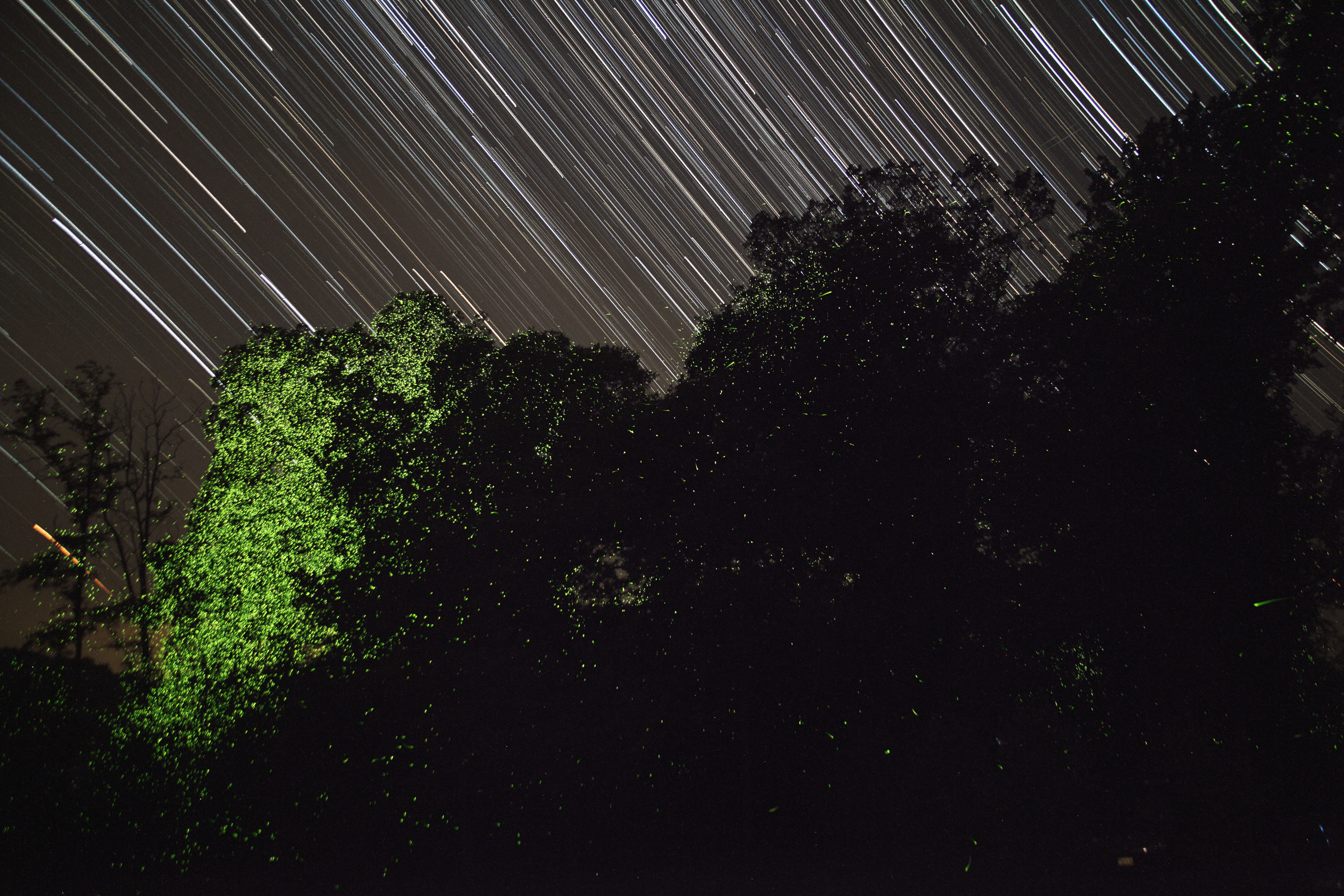 Stars & Fireflies