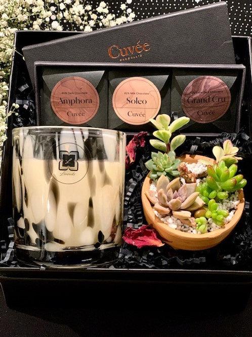 Dalmation Candle,Trio Cuvee Mini Succulent Pot