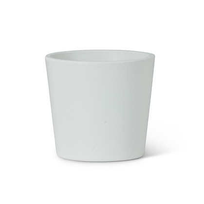 Succulent in Mini White Ceramic Planter