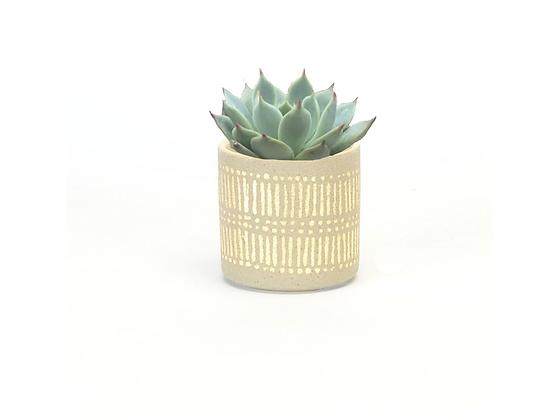 Succulent in Mini Gold Metallic Planter