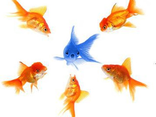 Why do so many Australian Health Clubs want to be the Orange Fish?