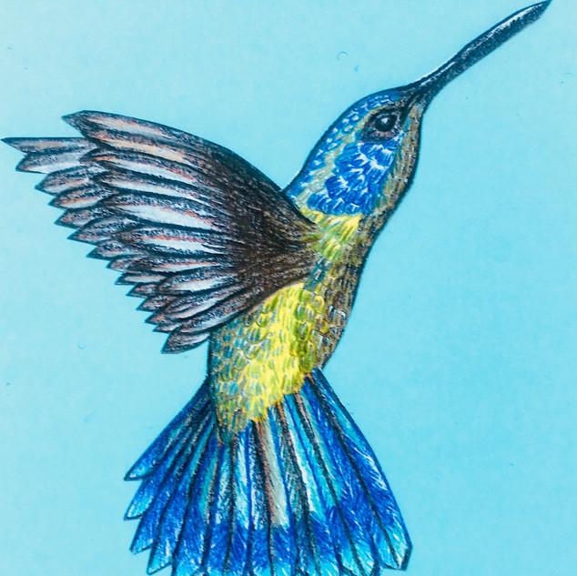 Colibrí azul