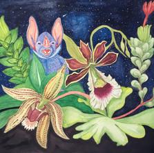 Orquídeas de la noche