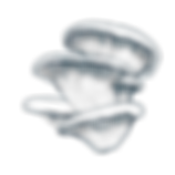 mushroom oyster small blue.png