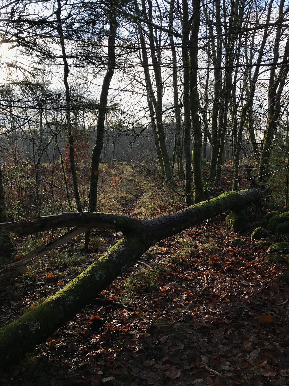 Ekered Nature Reserve on Skåneleden
