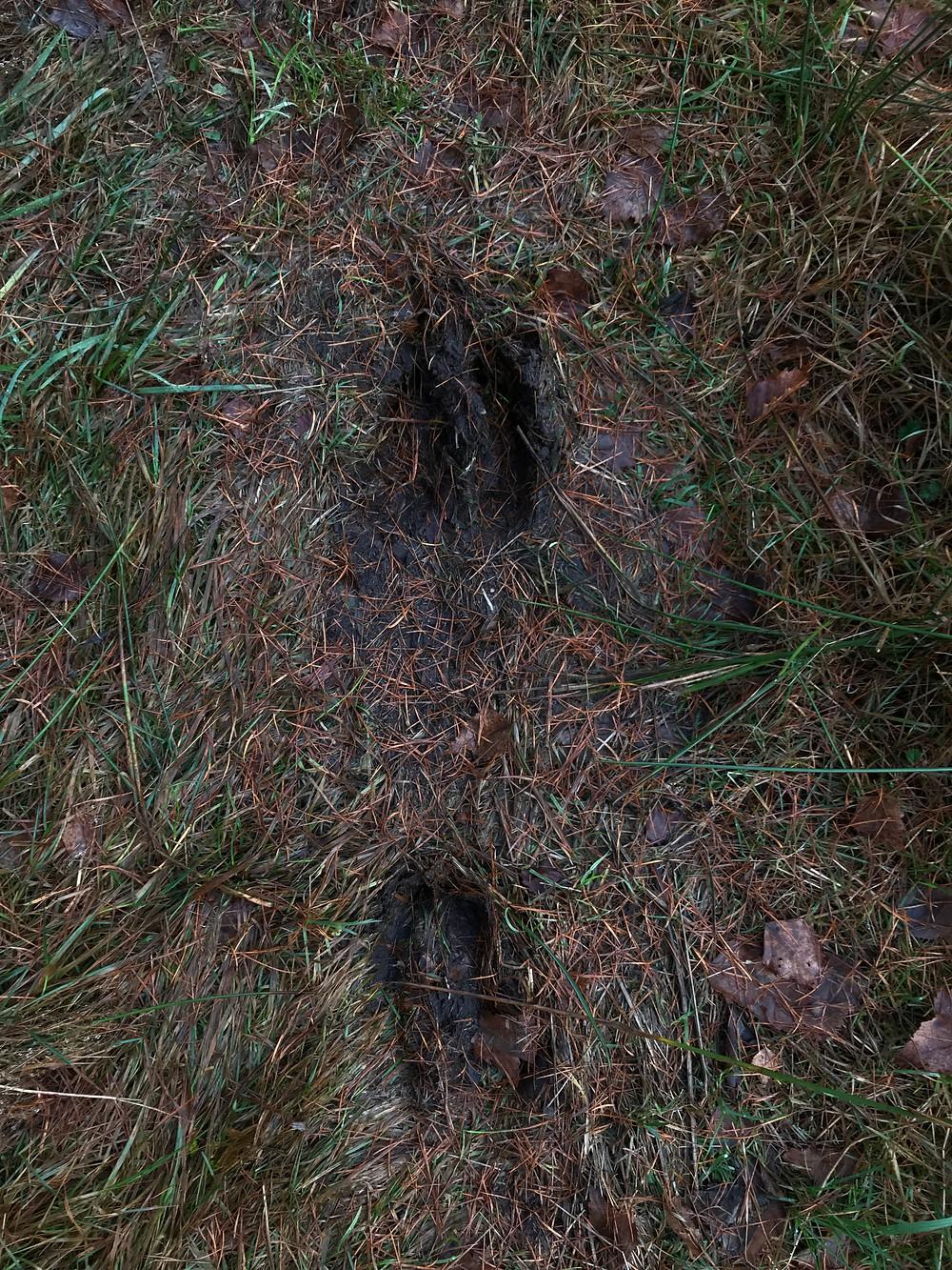 Animal prints on Skåneleden
