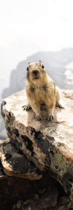 Chipmunk in the Mountains