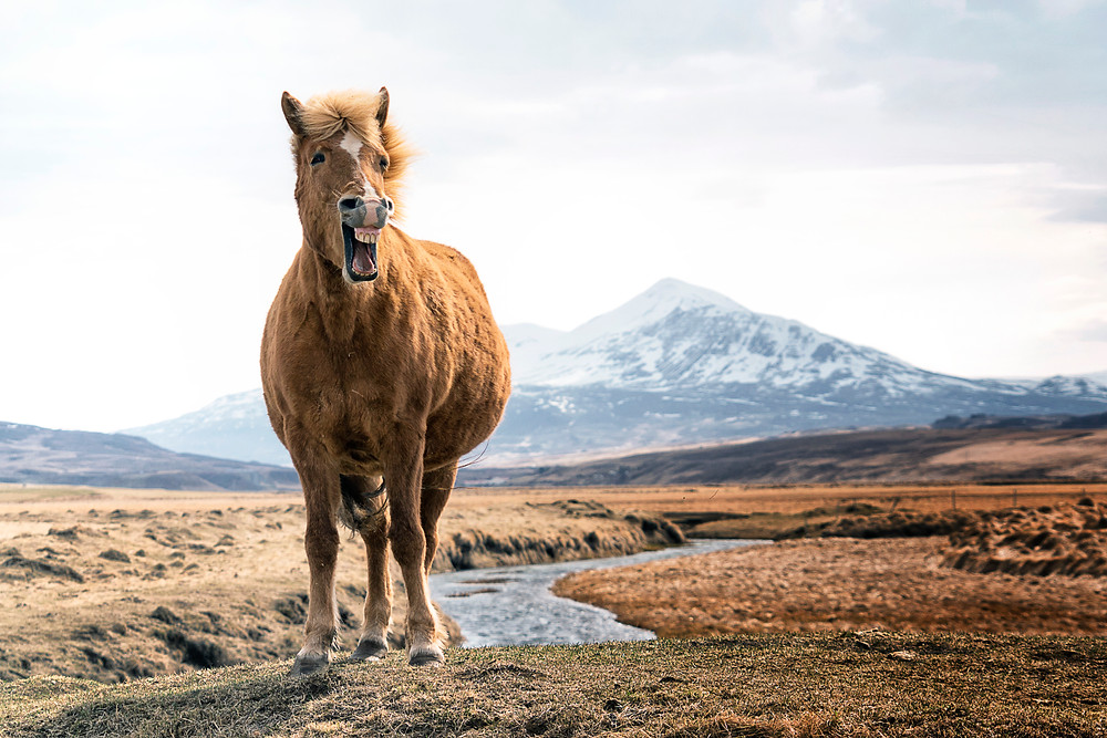 Happiest Horse I've ever seen