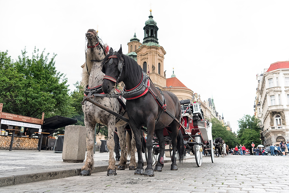 Horse carriage in the Old Town
