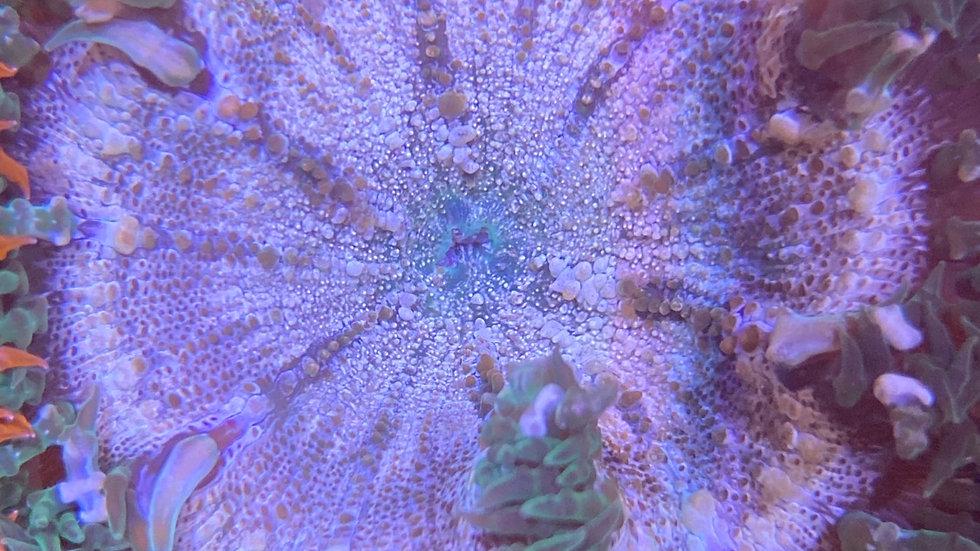 E13 rock flower