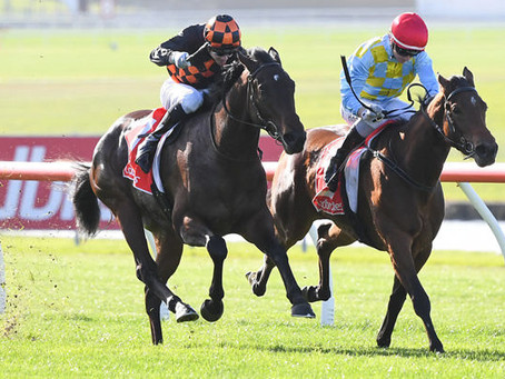 Bright Future for Pride of Dubai's Mystique Falcon