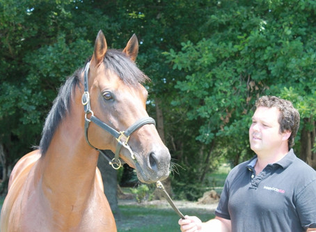 Zacinto moves north to Valachi Downs in 2018